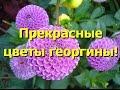 фото прекрасных растений