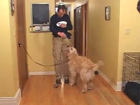 Train a dog not to jump on guests