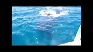 Baleines Nosy Be, No coment! avec les Baleines Rand'eau
