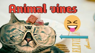 Amazing animal vines ● Funny ● animals make you happy .