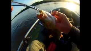 река Вятка, ловля спиннингом 20.06.2015г.