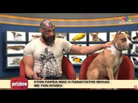 """Pet Show"" - 30.11.2016 - Diesel και Παναγιώτης Μήλας - Pitbull"