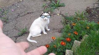 Взорвал интернет. Кот разговаривает, говорит ПРИВЕТ, дела НОРМАЛЬНО, я бык! милое видео VivaVideo.