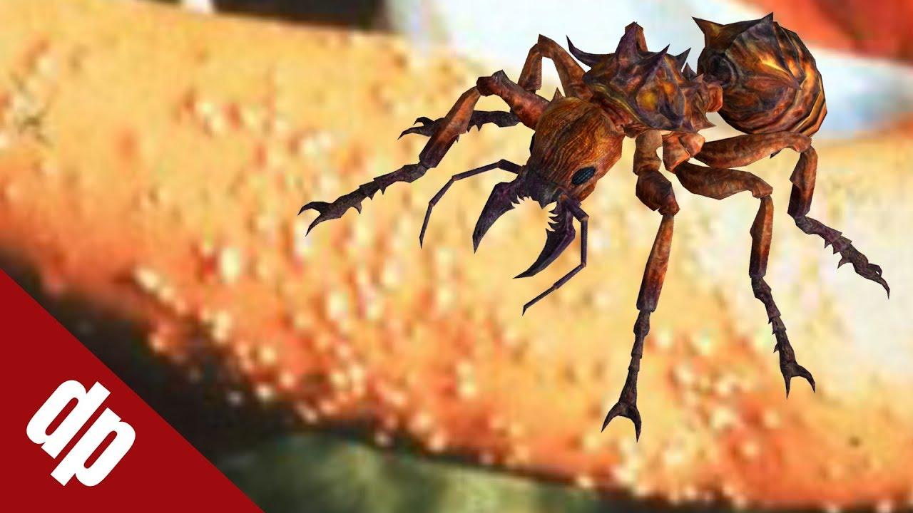 Top 10 loài kiến độc nhất thế giới có thể gây chết người | DP Channel
