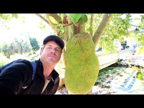 ECHO Farm: A Botanical Garden of Edible and Useful Tropical Plants