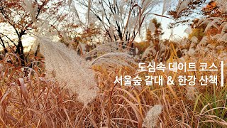 도심속 데이트코스 - 서울숲 갈대 & 한강