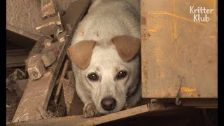 Dog Saves Family From Landslide But Lost Her Puppies (Part 1) | Animal in Crisis EP40