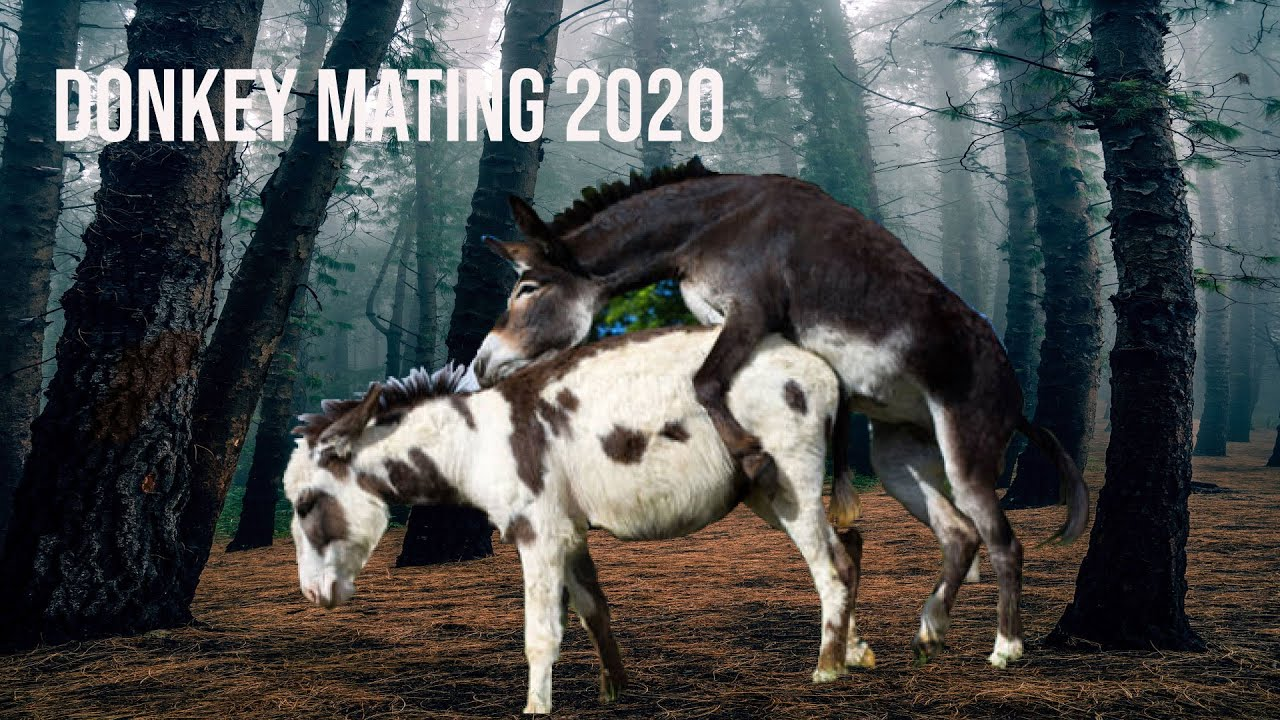 Download Donkey Mating First Time Village 2020