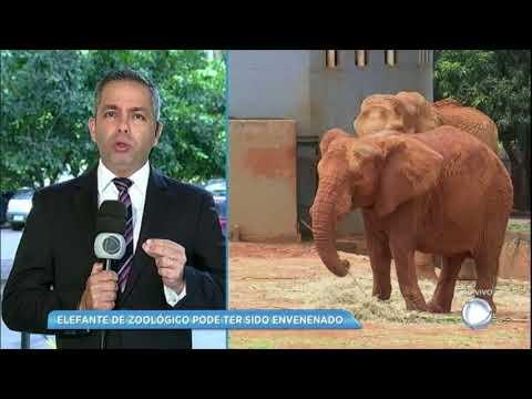 Elefante encontrado morto no Zoológico de Brasília pode ter sido envenenado