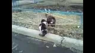 Весенняя песня котов