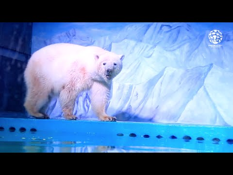 World's saddest polar bear lives in Chinese mall