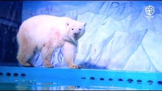 World's saddest polar bear lives in Chinese mall
