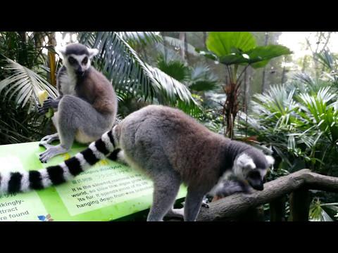 Kids visit wild animals at Zoo | Animals at Zoo