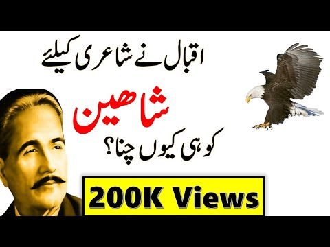 8 Qualities of Eagle/ Shaheen| Why Iqbal choosed eagle for his Poetry- Abdus Samad shah