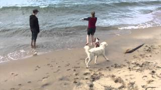 Dog Training Leads To Freedom | Follow The Leader Dog Training And Rehabilitation Llc