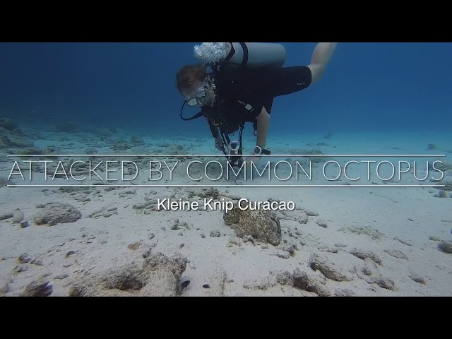 ATTACKED BY OCTOPUS - the making off and see the Insta360oneX in ACTION under water