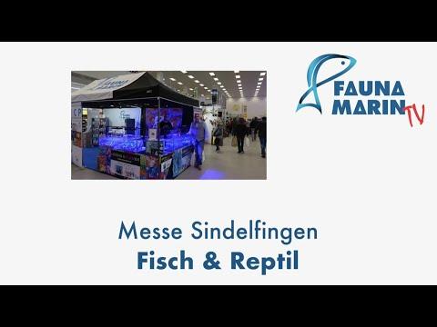 FaunaMarin: FMC auf der Fisch & Reptil und Ausschnitte Ladengeschäft