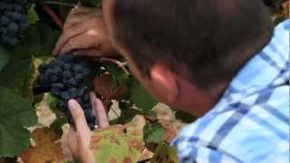 Popular Videos - Douro & Wine
