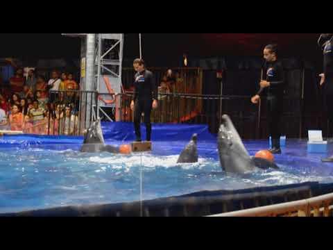 عرض مشوق للدلافين dolphins best show in beirut