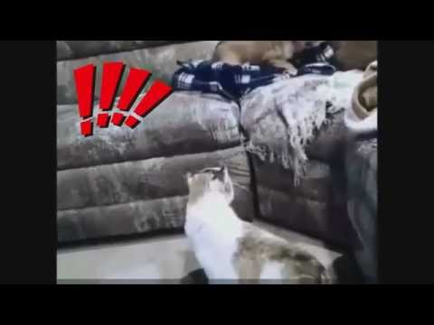A dog scared to death of a cat !! Very Funny !!