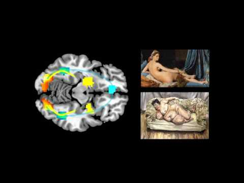 The Neurobiology of Beauty - UCL Lunch Hour Lecture