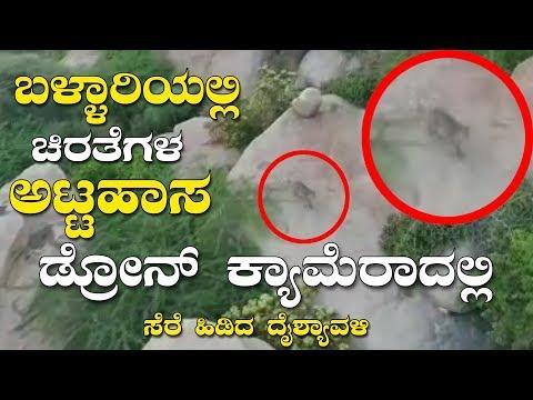 Bellary News | Cheetahs Pair Found in Bellary Live Cheetat Drone Camera Visual | YOYO Kannada News