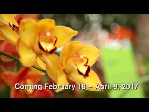 First Look—The Orchid Show: Thailand