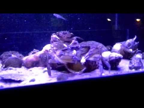 2 Teil Aquarium (Holland)