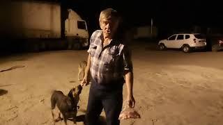 В Саратове сторож автостоянки подкармиливает стаю собак, которая нападает на людей