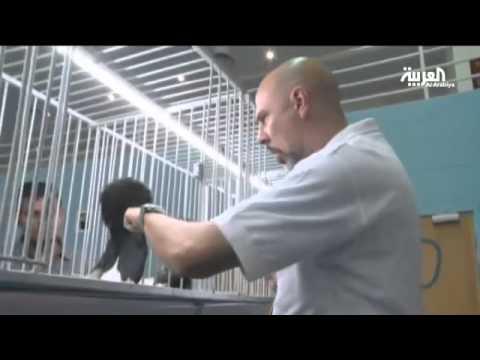 معرض طيور الزينة في البحرين