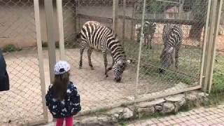 Зоопарк Анталья экскурсии Турция Zoo Antalya excursion Antalya