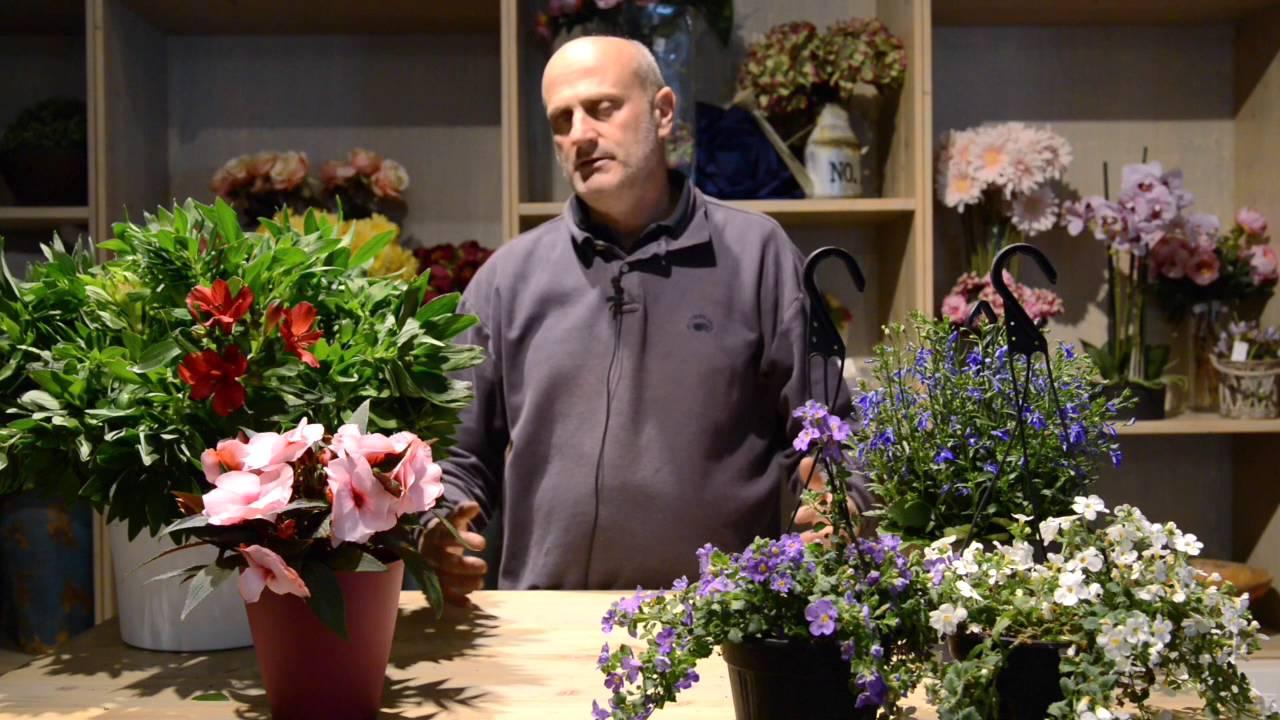 Fiori Da Balcone Ombra case poco soleggiate: le piante da fiore che vivono all'ombra