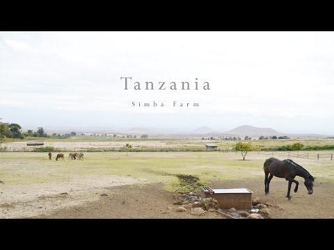 Tanzania Simba Farm- Engare Nairobi