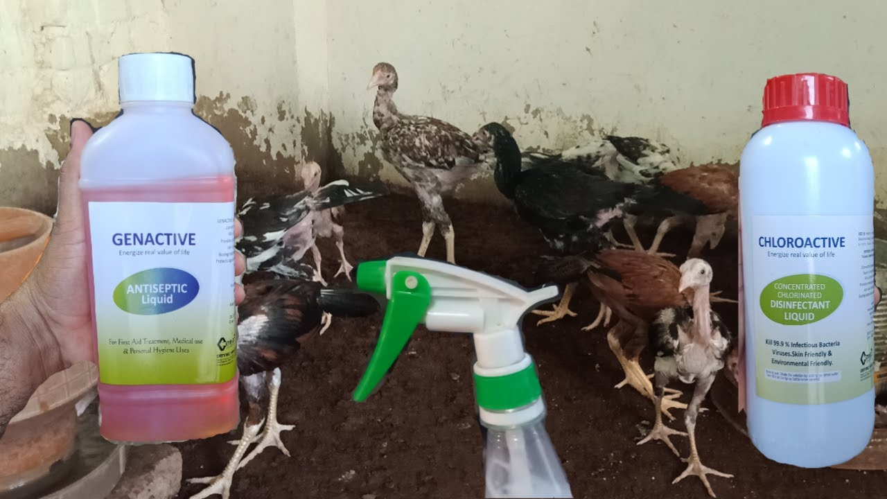 How To Take Care And Safe Your Bird's In Current Pandemic Situations By Zaheer Abbas