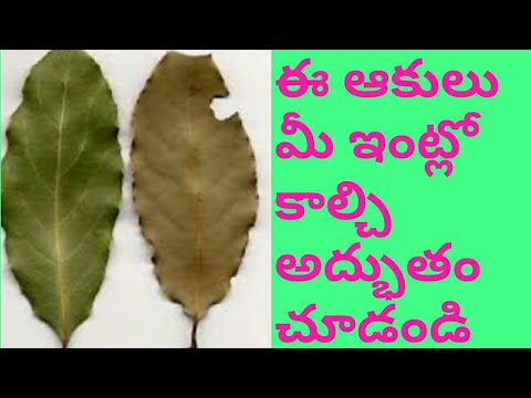 Bay Leaf Importance In Telugu Weight Loss Aromatherapy Youtube