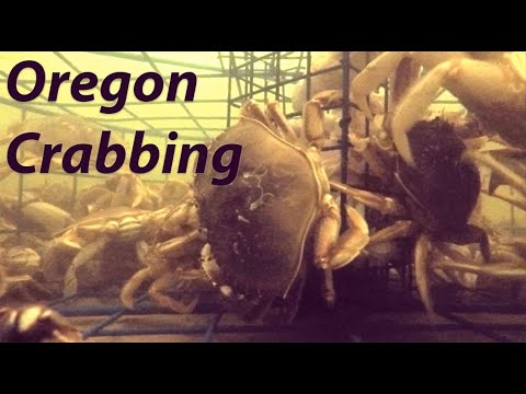 How To Catch Big Crab - Crabbing In Florence Oregon