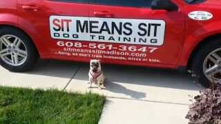 Pug Obedience Training