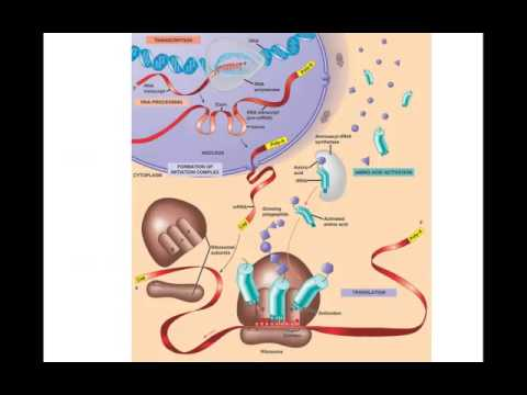 01. DNA structure and function - YouTube