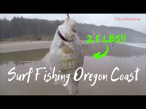 Surf Fishing The Oregon Coast - HUGE Surfperch At Cape Lookout