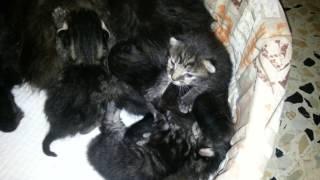 У Котят ПОГИБЛА МАМА Наша БЕРЕМЕННАЯ КОШКА УСЫНОВИЛА КОТЯТ PREGNANT CAT ADOPTED ORPHANED KITTENS