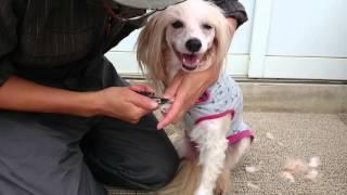 静岡県浜松市で犬のしつけ教室ををしていますペットのブリーダーワンブ...