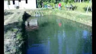Isparta Cukur Köyü Alabalik Havuzlari Gözde Balikcilik