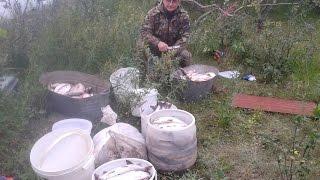 Рыбалка на белую рыбу. Вылов рыбы сетями. Fishing Nets.