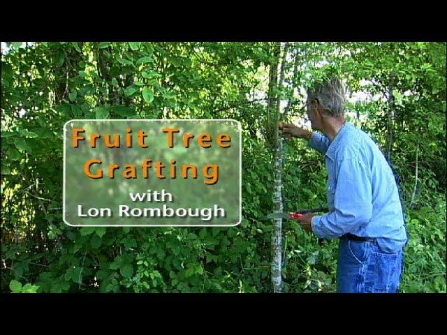 Grafting Fruit Trees - Lon Rombough
