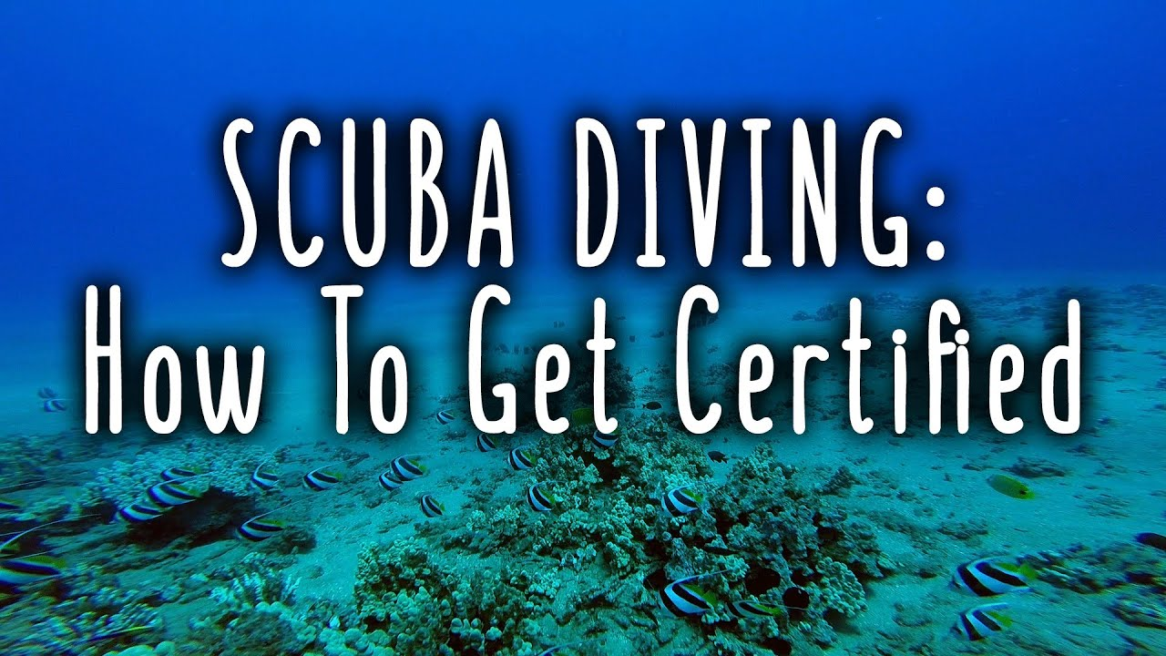 Scuba Diving How To Get Certified Youtube