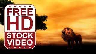 FREE HD video backgrounds – 3D animated animal lion in savannah scene