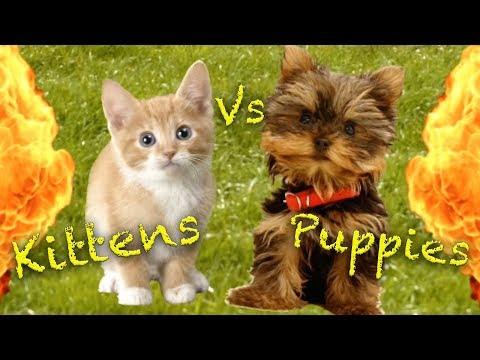 Kittens Vs Puppies