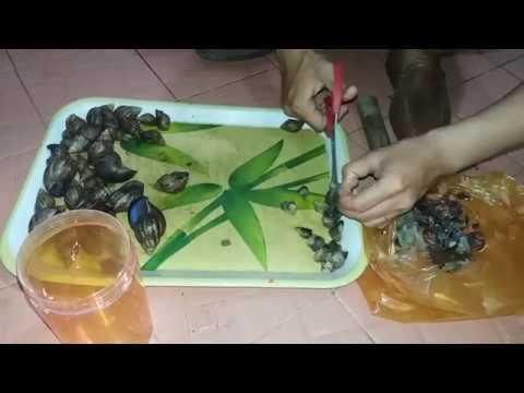 CÂU CÁ MIỀN TÂY PHẦN 20: Làm mồi câu Cá Trê ,90% Thành Công || Make bait fishing 90% effective