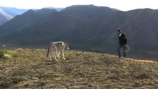 instinct for film wolf demo reel
