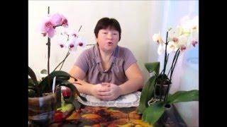 Как ухаживать за орхидеями весной(Я остановлюсь подробно на таких вопросах: Что происходит с орхидеей весной? Как поливать орхидеи весной?..., 2016-04-20T13:09:58.000Z)
